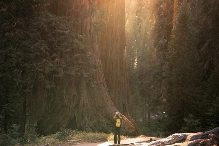 Sequoias 2017 2
